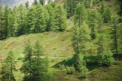 alprechtalmlauf2008-006