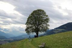 gaisinger-berglauf-2016-0022