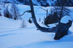 skialp2014-020